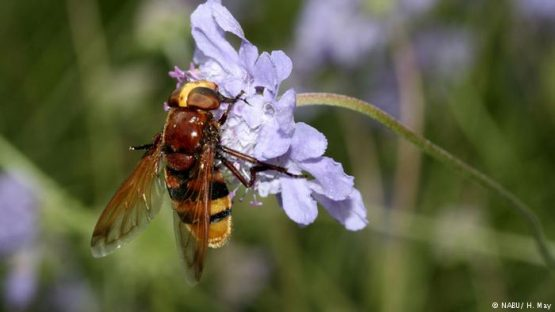 Muerte masiva de insectos en Alemania