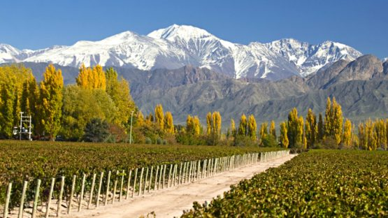 mendoza-argentina-vineyards-davidsbeenhere